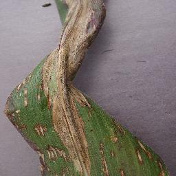 Plant leaf infection detection Project